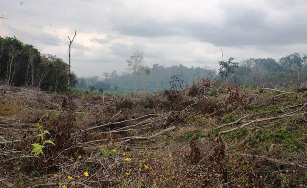 54 incendios forestales activos en 18 estados en el país: Conafor
