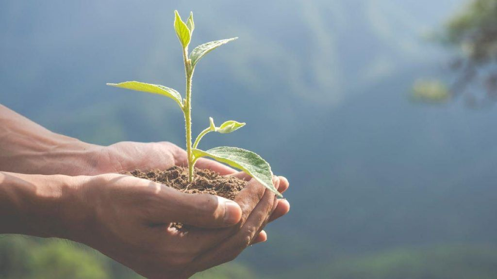 Medio ambiente limpio es declarado como derecho humano