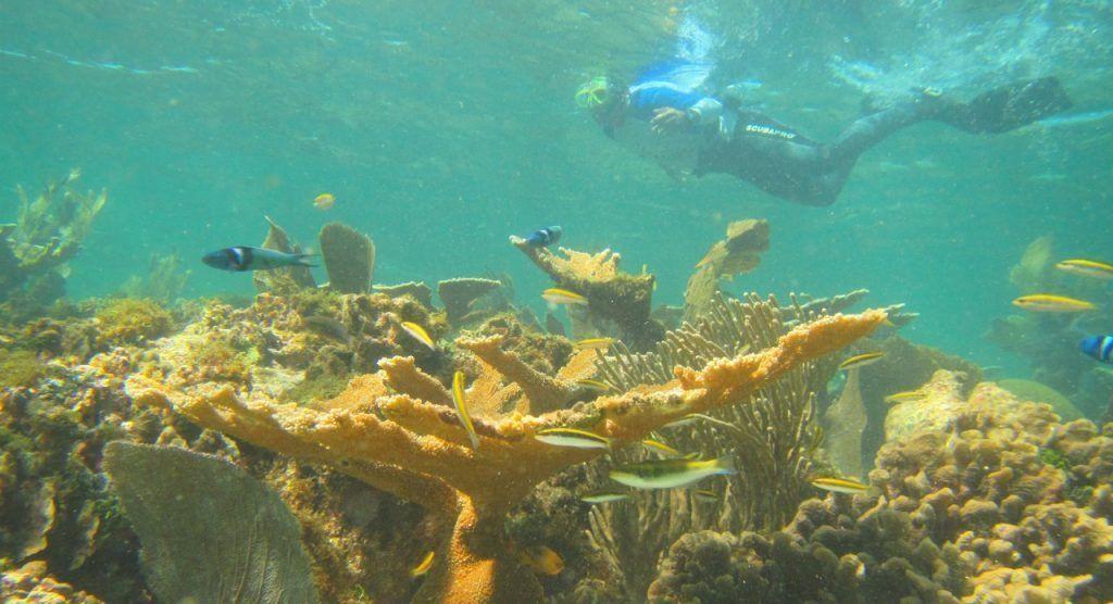 En el mundo se ha perdido 14% de arrecifes de coral en 12 años