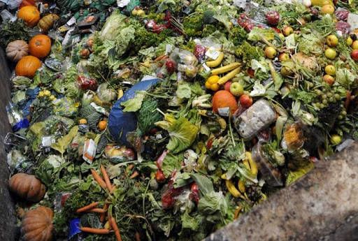 Presentan diputados de MORENA iniciativa para evitar desperdicio de alimentos