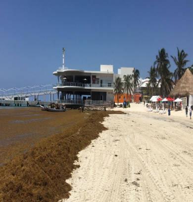 Alerta NASA por llegada de sargazo a Quintana Roo