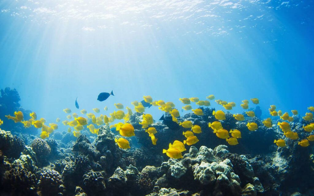 8 de junio, Día Mundial de los Océanos