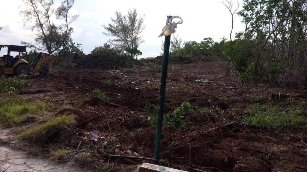 Talan más de 1000 metros cuadrados de mangle en Isla Mujeres